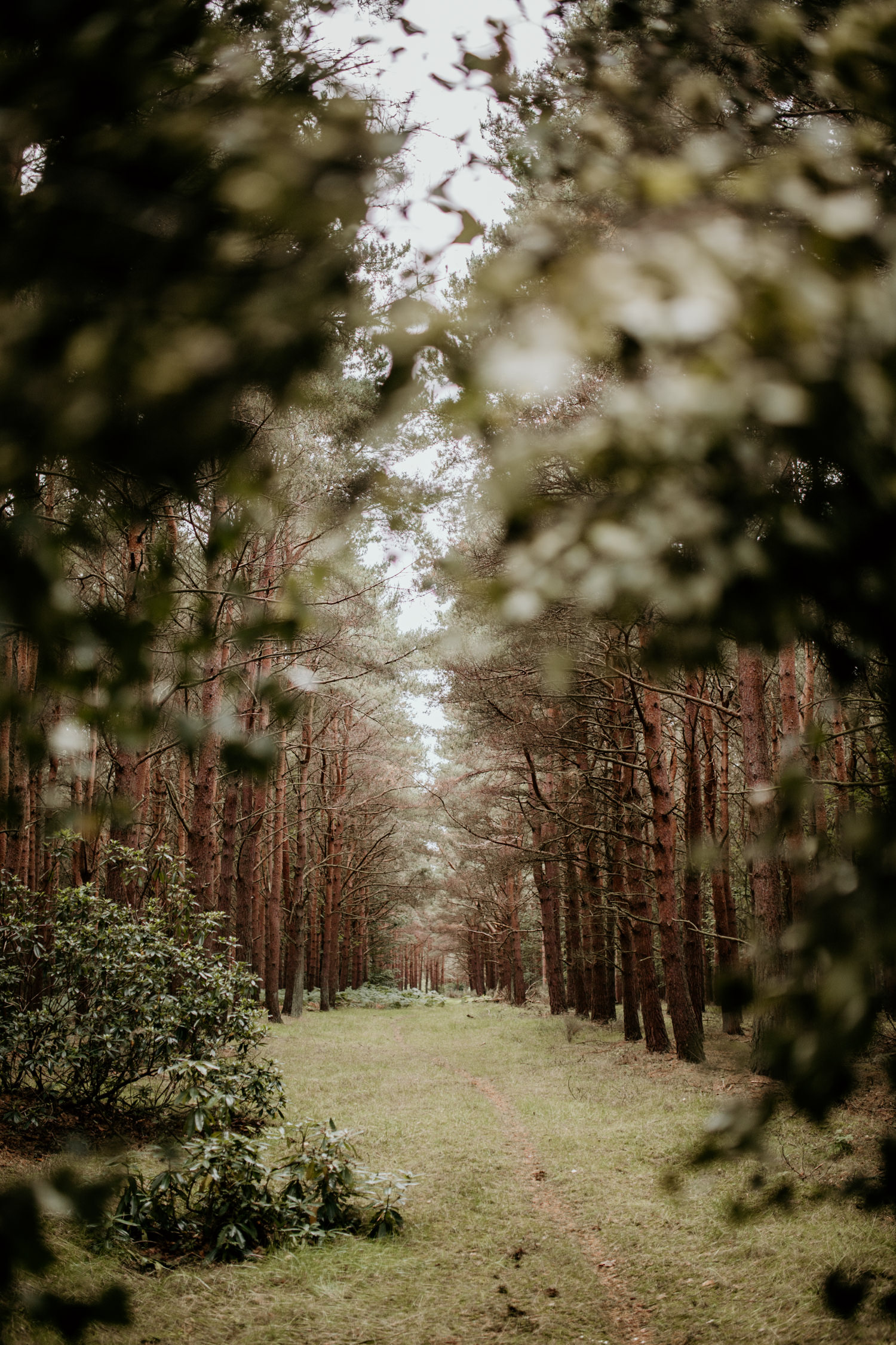forest landscape for the outdoor wedding ceremony at Harvest Moon Holidays Scotland