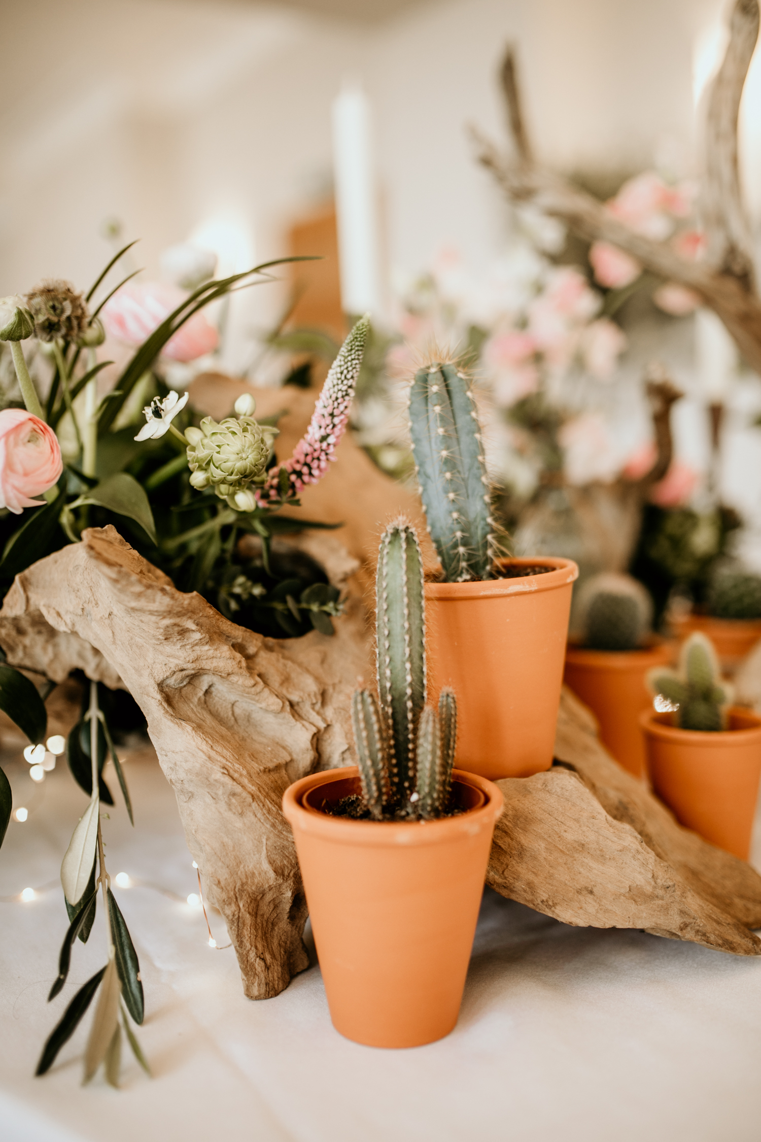wedding decor with cactus plants and drift wood on top table